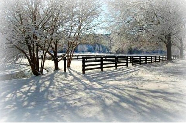 winter-wonderland-Lisas-property